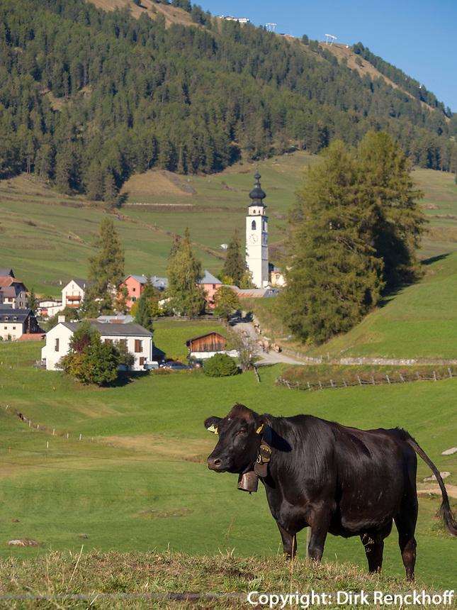 Kühe, Blick auf Flan, Scuol, Unterengadin, Graubünden, Schweiz, Europa<br /> cattle near Flan, Scuol, Engadine, Grisons, Switzerland