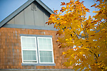 Yellow Leaves, Brown Shingled Home