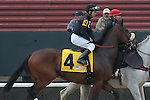 HOT SPRINGS, AR - JANUARY 16: Rowdy The Warrior #4 with jockey Luis Quinonez aboard before the running of the Smarty Jones Stakes at Oaklawn Park on January 16, 2017 in Hot Springs, Arkansas. (Photo by Justin Manning/Elipse Sportwire/Getty Images)