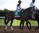"""October 04, 2015: Got Lucky and jockey Irad Ortiz Jr. win the 60th running of the Juddmonte Spinster (Grade 1) """"Win and You're In Distaff Division"""" $500,000 at Keeneland for trainer Todd Pletcher and owner Philip Steinberg and Hill 'n' Dale Equine Holdings. Samantha Bussanich/Eclipse Sportswire/Cal Sport Media"""