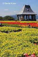 0904-0816  Coleus Garden, Solenostemon spp. © David Kuhn/Dwight Kuhn Photography.