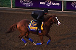 November 4, 2020: Improbable, trained by Bob Baffert, exercises in preparation for the Breeders' Cup Classic at Keeneland Racetrack in Lexington, Kentucky on November 4, 2020. John Voorhees/Eclipse Sportswire/Breeders Cup/CSM