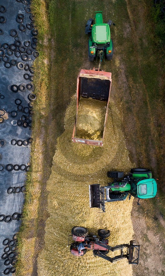 28/08/18 - CREVANT LAVEINE - PUY DE DOME - FRANCE - Tassage du silo d ensilage de mais - Photo Jerome CHABANNE