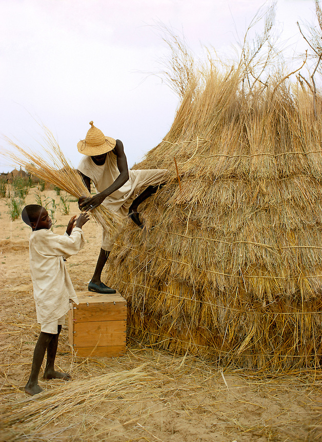 Men covering a thatch hut in Kanem Chad Africa