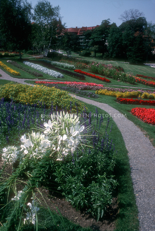 White cleome spider flowers in foreground of garden beds, Mohonk Mountain House, NY