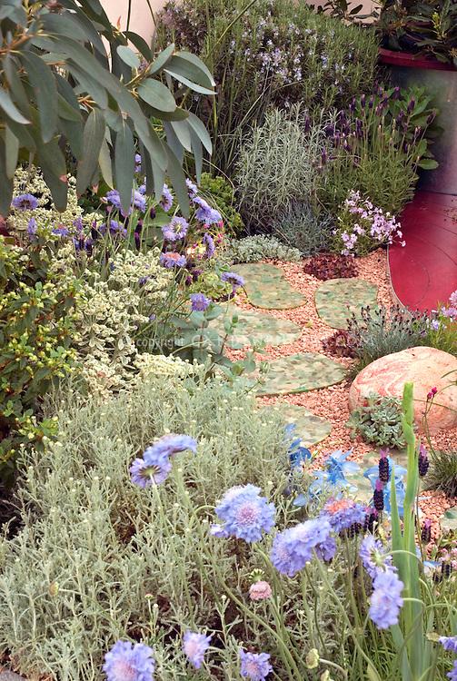 Blue Garden with Scabiosa, blue columbine Aquilegia, blue lavender, Eucalyptus, phlox with garden path and patio
