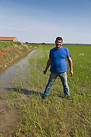 France/13/Bouches du Rhone/Camargue/Parc Naturel Régionnal de Camargue/Albaron: Jacques Rozière, riziculteur dans ses rizières, Exploitation rizicole: Mas de la Vigne [Non destiné à un usage publicitaire - Not intended for an advertising use]