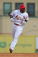 March 20, 2010:  Ruben Gotay (3) of the St. Louis Cardinals rounds the bases after hitting a walk off home run during a Spring Training game at the Roger Dean Stadium Complex in Jupiter, FL.  Photo By Mike Janes/Four Seam Images
