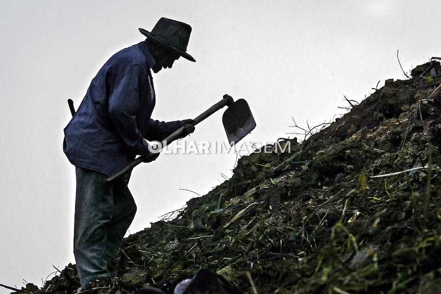 Plantio da cana de acucar na Usina Catende. Catende. Pernambuco. 2004. Foto de Ubirajara Machado.