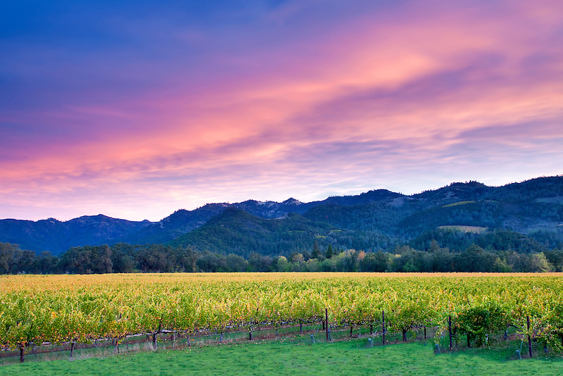 Sunrise over Napa Valley vineyard with fall color. California