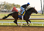 Tom'S D'Etat, trained by trainer Albert M. Stall Jr., exercises in preparation for the Breeders' Cup Classic at Keeneland Racetrack in Lexington, Kentucky on November 5, 2020.