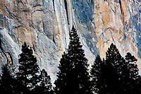 El Capitan with silhouetted trees. Yosemite National Park, California