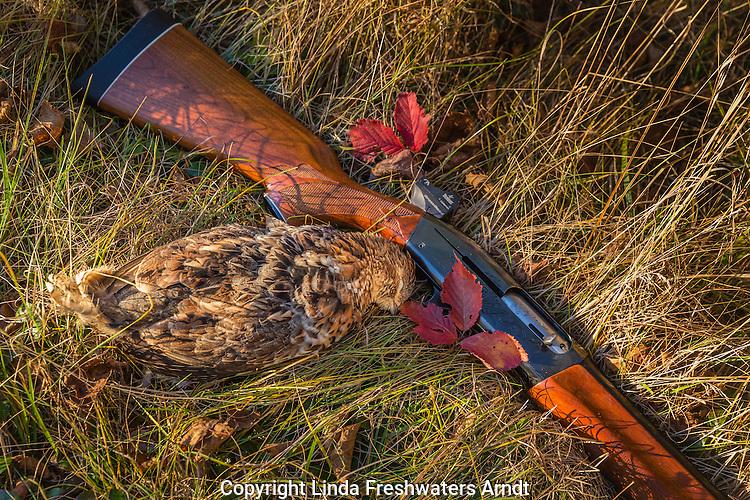 Remington shotgun and ruffed grouse