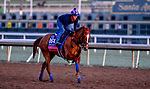 October 30, 2019: Breeders' Cup Juvenile Fillies Turf entrant Sharing, trained by H. Graham Motion, exercises in preparation for the Breeders' Cup World Championships at Santa Anita Park in Arcadia, California on October 30, 2019. Scott Serio/Eclipse Sportswire/Breeders' Cup/CSM