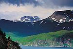 Bald Eagle, Unalaska Island, Alaska, USA