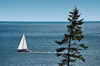 Sailboat along the Acadia coast, Maine, ME, USA