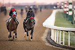 Wildman Jack, trained by trainer Doug F. O'Neill, exercises in preparation for the Breeders' Cup Turf Sprint with Hot Rod Charlie, trained by trainer Doug F. O'Neill, exercises in preparation for the Breeders' Cup Juvenile