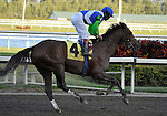 31 January 2009: Nicanor, with jockey Edgar Prado, runs in his first race and finishes 11th in a maiden race at Gulfstream Park in Hallandale, Florida.