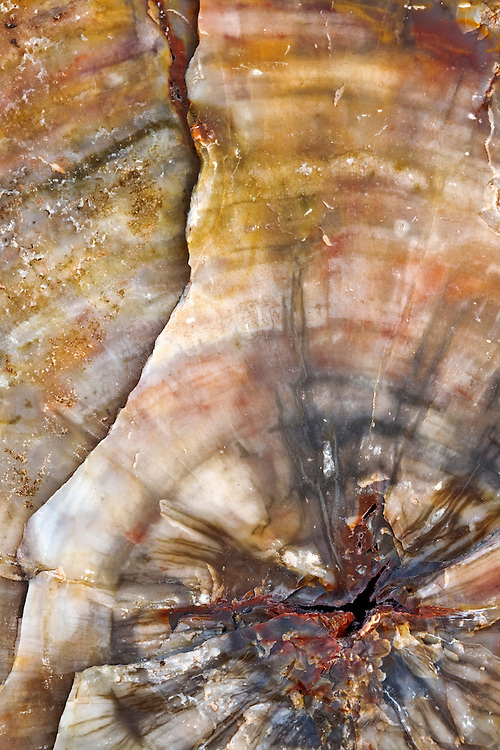 Close-up view of petrified wood used to build the Agate House