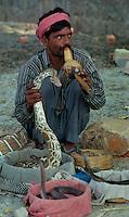 Delhi / India.Scene di vita quotidiana nelle campagne alla periferia di Delhi. Nella foto un incantatore di serpenti..Foto Livio Senigalliesi..Delhi / India.Scenes of daily life in the countryside on the outskirts of Delhi. In the picture a snake charmer..Photo Livio Senigalliesi.