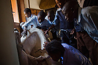 """Children from grades 4 and 5 at Chalilo school in Sereje district, handle an elephant skull on their first safari in Kasanka National Park. 14 year old Nickson Mwansa (second from left) says, """"I liked to learn the structure of the crocodile, and was also happy to see the size of the horns of an elephant; they were much bigger than I expected them to be."""" Local schools and women's groups are regularly brought into Kasanka, which is unique in the country and unusual in Africa as it is privately managed and owned by a trust. People are able to see animals flourishing in land which was once free reign for poachers. Combined with anti-poaching scouts, the education programme is on the frontline of conservation methods in the park, showing local people wild animals in their natural habitat."""