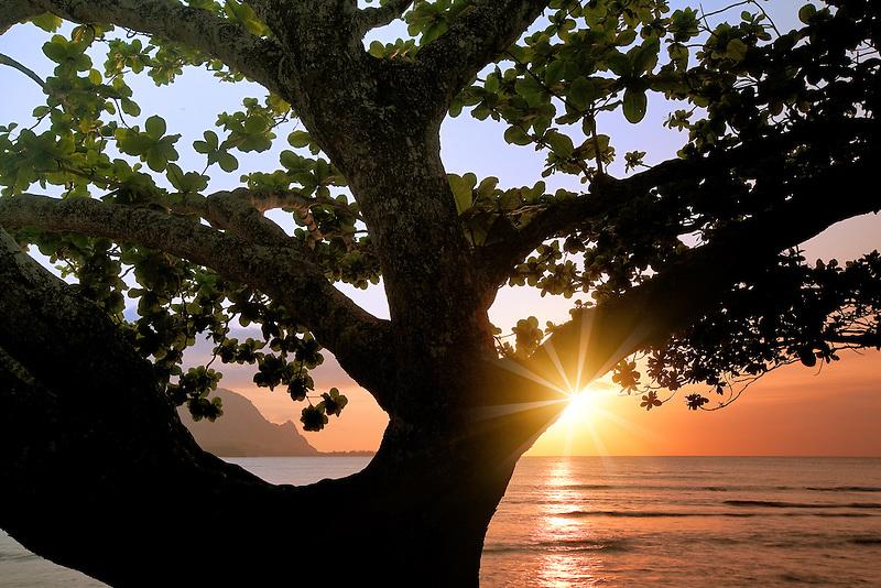 Sunset in Hanalei Bay with mangrove tree. Kauai, Hawaii