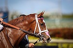 HALLANDALE FL - FEBRUARY 27: Catch a Glimpse #8, in portrait after winning the Herecomesthebirde Stakes at Gulfstream Park on February 27, 2016 in Hallandale, Florida.(Photo by Alex Evers/Eclipse Sportswire/Getty Images)