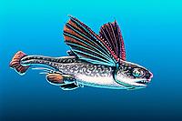 illustration, artists rendition of Promyxele male), Paleozoic Iniopterygiian shark with winglike pectoral fins, Euchondrocephali - intermediate between shark & chimaeras, prehistoric marine life
