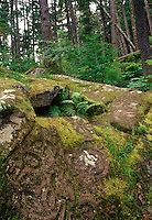 Pre columbian native indian petroglyphs found in the Pacific Northwest rainforest