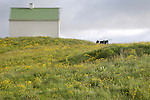 Home on meadow, Grimsey, Iceland
