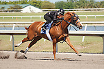 #12Fasig-Tipton Florida Sale,Under Tack Show. Palm Meadows Florida 03-23-2012 Arron Haggart/Eclipse Sportswire.