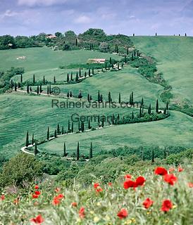 Italy, Tuscany, famous Cypress avenue and poppy field near Montepulciano   Italien, Toskana, oft fotografierte Zypressenallee und Mohnfeld bei Montepulciano