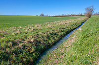 Drain runnning between two wheat fields with field margins - Northamptonshire, April