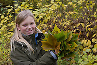 Mädchen, Kind sammelt bunte Ahorn-Blätter im Herbst, Ahorn, Acer, Herbstlaub, Laub, herbstlich, autumn