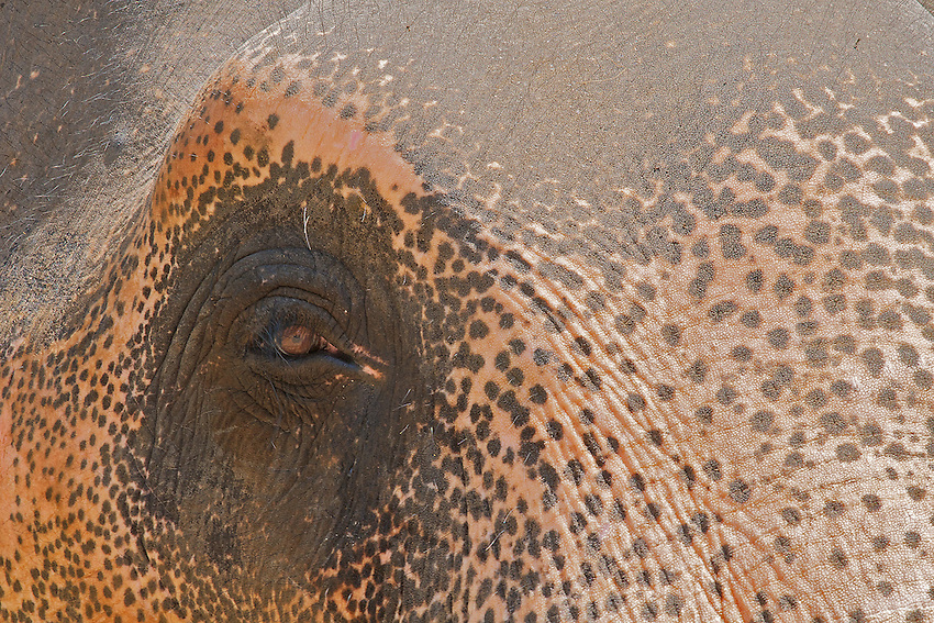 Elephants Eye, Sri Lanka