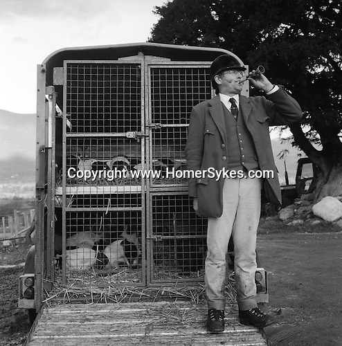 The Blencathra Foxhounds.  Barry Todhunter calls in missing hounds at the end of the day's hunt. Near Braithwaite, Cumbria.<br /> <br /> Hunting with Hounds / Mansion Editions (isbn 0-9542233-1-4) copyright Homer Sykes. +44 (0) 20-8542-7083. < www.mansioneditions.com >