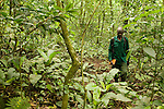 Anti-poaching snare removal team member, John Okwilo, searching for illegally set snares in rainforest, Kibale National Park, western Uganda