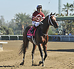 TAPIZAR, ridden by Corey Nakatani and trained by Steve Asmussen, wins the Breeders' Cup Dirt Mile at Santa Anita Park in Arcadia, California on November 3, 2012.