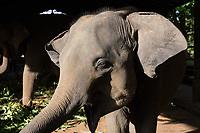 A young elephant at the Pinnawala Elephant Orphanage in Sri Lanka.