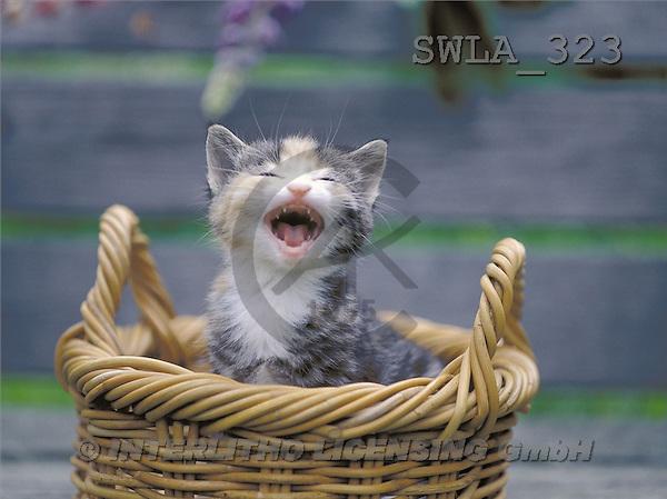 Carl, ANIMALS, photos(SWLA323,#A#) Katzen, gatos