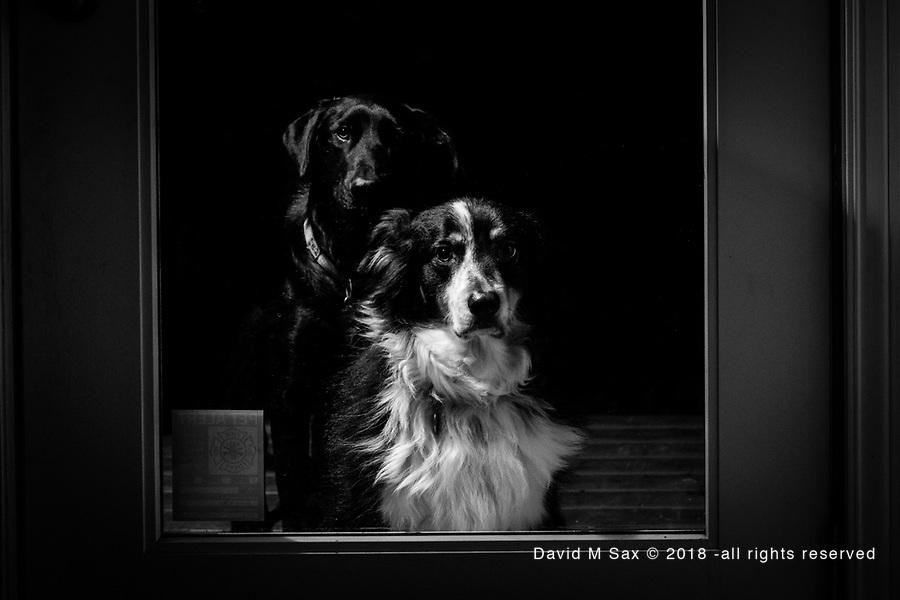 12.4.18 - Let Me In....