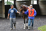 10 July 2010:  Nicanor in the paddock before the Sussex Stakes at Delaware Park, Stanton, DE. He set the pace, then finished third. When the race was taken off the turf 7 horses were scratched, leaving a field of 4.