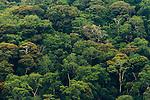 Tropical rainforest, Lope National Park, Gabon
