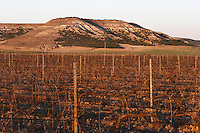 the vineyard Bodegas Concejo (previously called Pilcar), DO Cigales , Valoria la Buena spain castile and leon