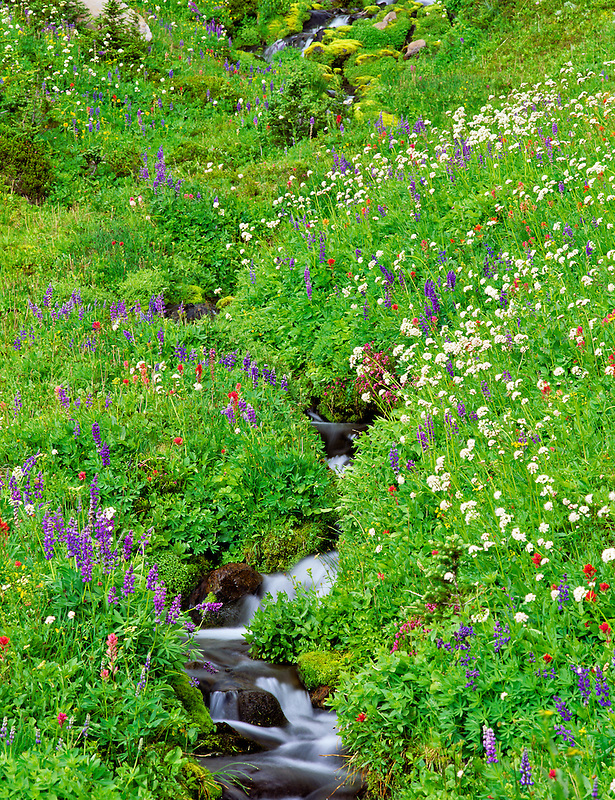 Wildflowers and stream. Bird Creek Meadows, Washington.