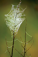 Cobweb, Cathkin Braes Country Park, Glasgow