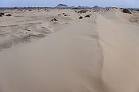 EGYPT, Bahariyya, Black desert and sand dunes , tamarisk or tamarix trees with large roots and sand hill / AEGYPTEN, Bahariyya, Schwarze Wueste und Sandduene, Tamarisken baumartige Pflanzen
