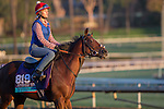 OCT 29 2014:Wet Sail, trained by Charlie Fellowes, exercises in preparation for the Breeders' Cup Juvenile Turf at Santa Anita Race Course in Arcadia, California on October 29, 2014. Kazushi Ishida/ESW/CSM