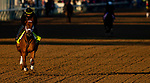 April 26, 2021: Known Agenda gallops in preparation for the Kentucky Derby at Churchill Downs in Louisville, Kentucky on April 26, 2021. EversEclipse Sportswire/CSM