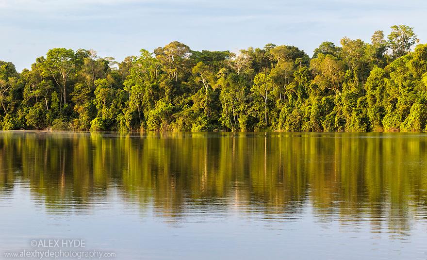Lowland rainforest along the banks of Salvador Oxbow Lake, Manu Biosphere Reserve, Amazonia, Peru.
